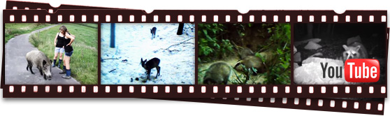 Kleine Tierfilmer